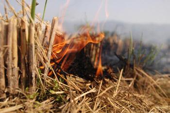 fire0003.jpg